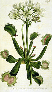 170px-Drawing_of_Venus_Flytrap