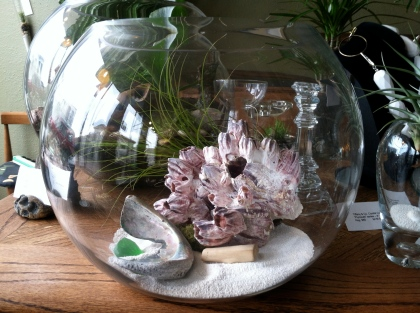 Terrarium with giant barnacles, tillandsia airplant, sand and sea glass by Moss + Mineral.