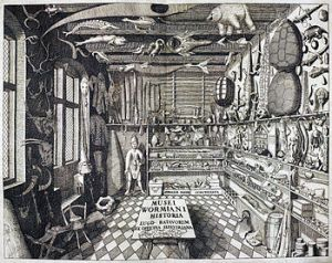 A 17th-century cabinet of curiosities.